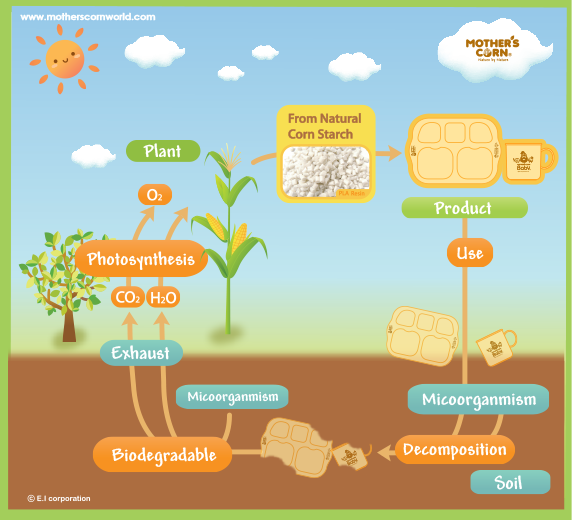 Eco-Friendly Kids Mother's Corn Decomposition Cycle